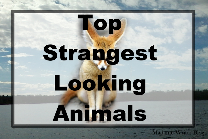 Top Strangest Looking Animals
