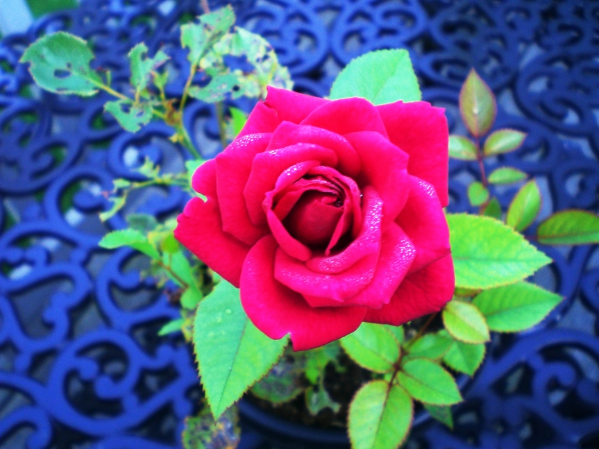 A rose by any othername