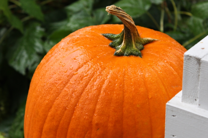 The Season ofPumpkins