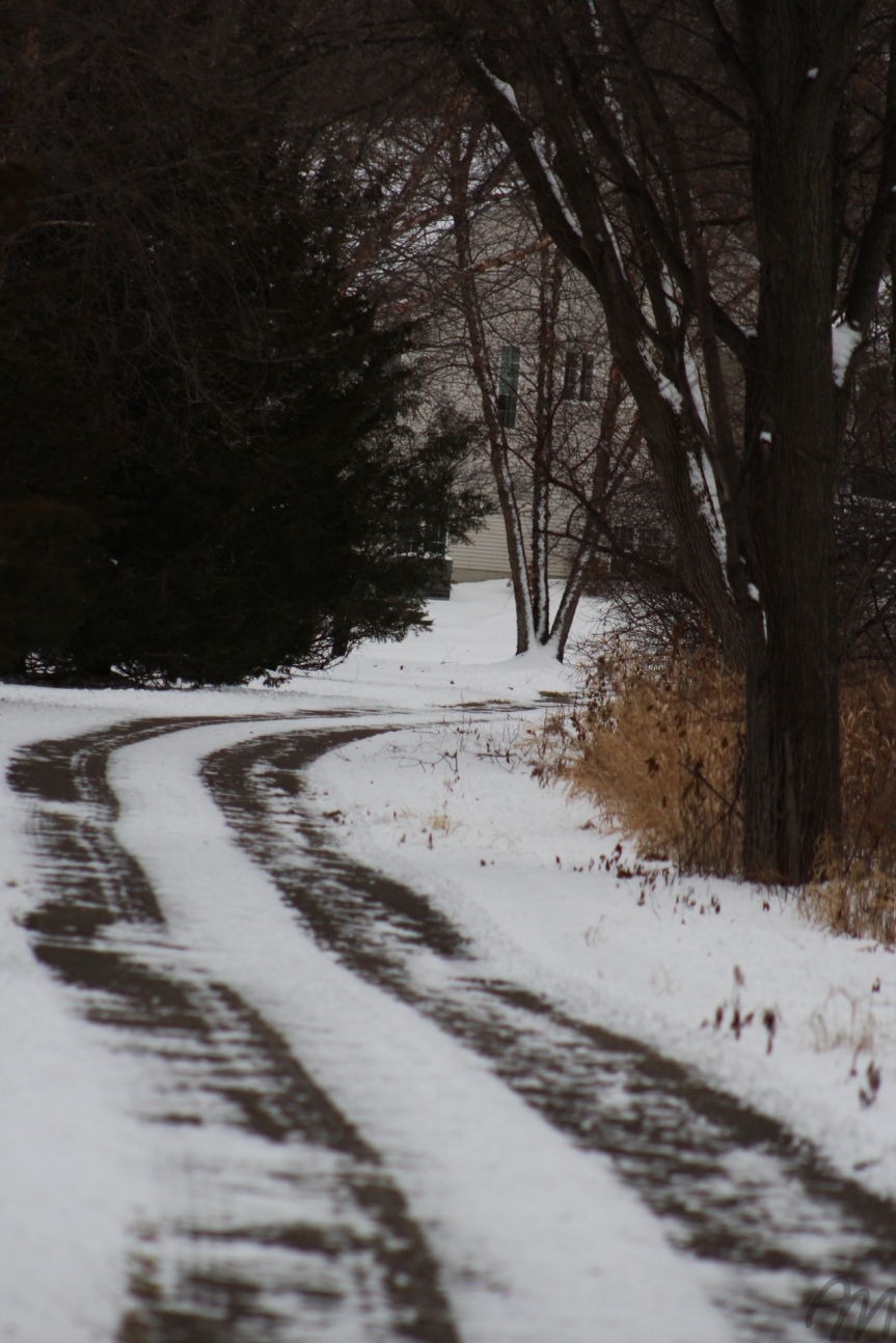 Photo Friday: Paths of Winter